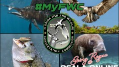 florida-fish-and-wildlife-hashtag-myfwc-ocala-online