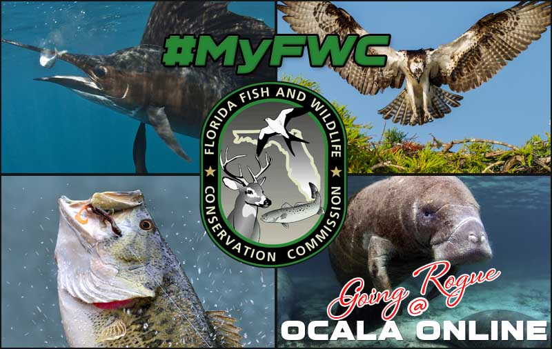 The ocala national forest ocala online for Fish and wildlife florida