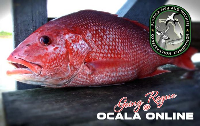 Noaa fisheries announces red snapper will remain closed in for Fish and wildlife florida